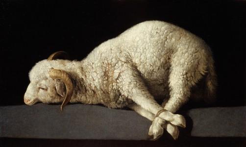 sheep-the-lamb-of-god