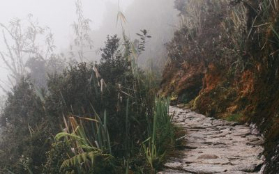 Pathways to Custodianship